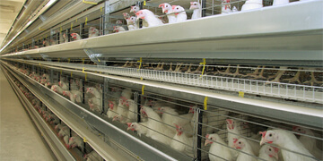Equipment of poultry farm designed for 70k hens
